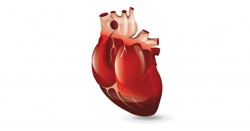 https://cdn.medme.pl/zdjecie/6696,840,440,1/serce+budowa+anatomia.jpg