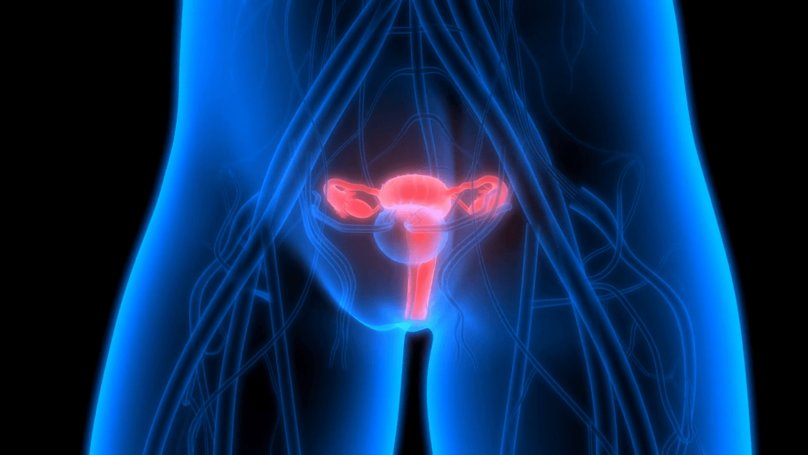 https://i1.wp.com/agronom.guru/wp-content/uploads/2019/10/female-reproductive-system-with-nervous-system-and-urinary-bladder_bxsgtdyxl_thumbnail-full01.png
