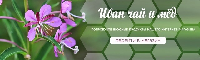 Иван-чай при простатите у мужчин: свойства, противопоказания, отзывы
