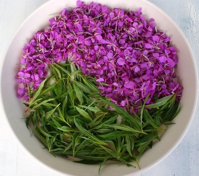 Как принимать Иван-чай при простатите: показания и способы применения Иван-чая при лечения простатита