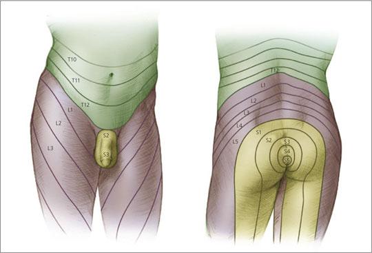 urinary-2.jpg