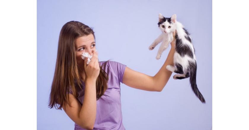 Аллергия на шерсть животных - причины, симптомы, тесты и лечение