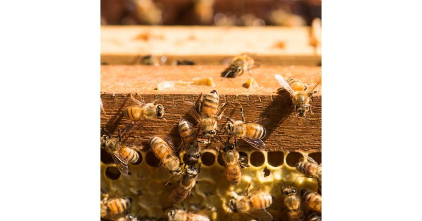 Аллергия на яд насекомых - причины, симптомы, лечение и профилактика