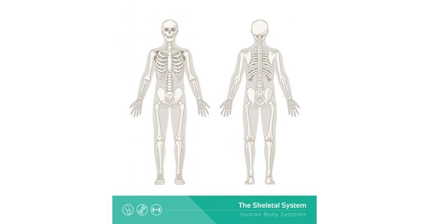 Некроз стерильных костей