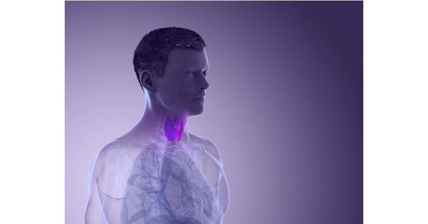 Шишки в щитовидной железе