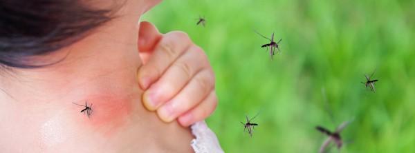 Что такое денге и как она распространяется?