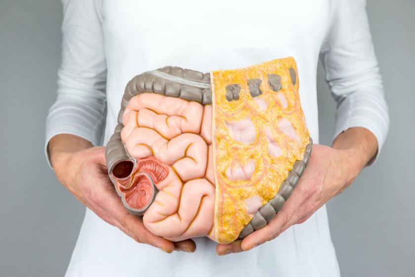 Модель пищеварительной системы