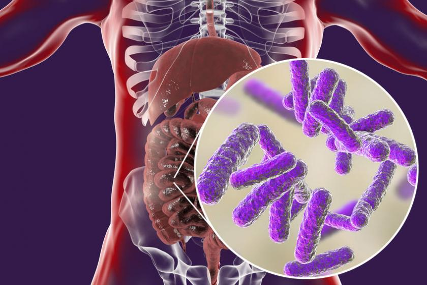 Визуализация микробиома