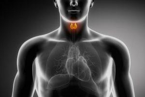 Визуализация щитовидной железы у мужчины