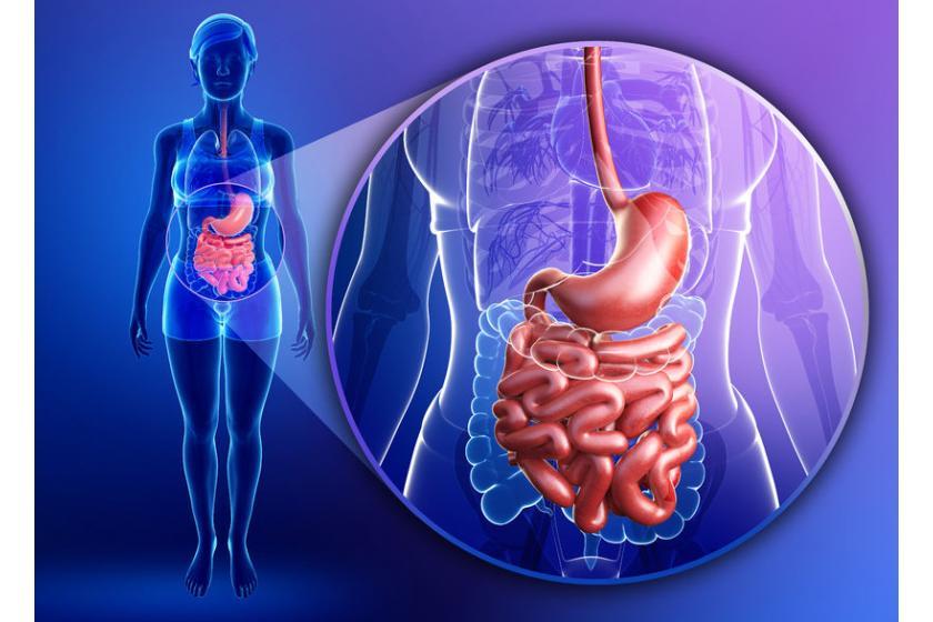 Заболевания желудка и двенадцатиперстной кишки
